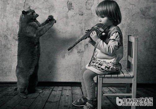 猫咪的生活习性大揭秘