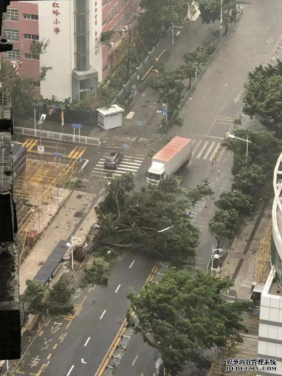 16日中午1点左右,深圳市罗湖区西湖宾馆附近一棵树被连根拔起(图片来源:每经记者 任芷霓 摄)